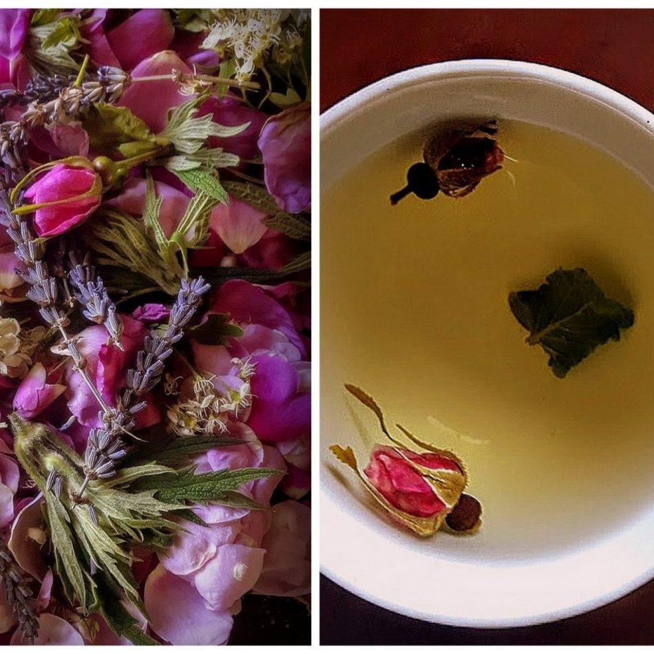 Wild Rose, Lavender, Hawthorn Blossom & Motherwort Tea for Loving Protection & Mother Love