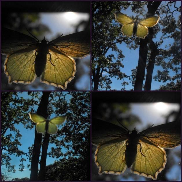 butterfliesbodydivien.jpg