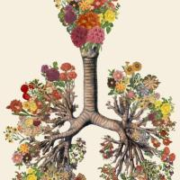 The Yoga of Time: Chronobiology and Your Inner Plant