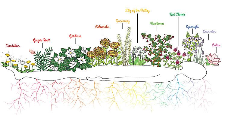 savasana-chakra-gardenblog-004